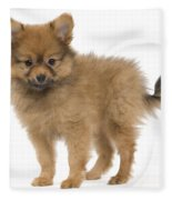 Pomeranian Puppy Dog Fleece Blanket