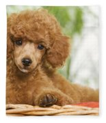 Poodle Fleece Blanket