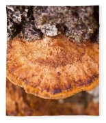 Poria Shelf Fungi 1 Fleece Blanket