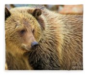 Portrait Of A Grizzly Fleece Blanket