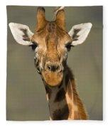 Portrait Of A Rothchilds Giraffe Fleece Blanket
