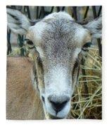 Portrait Of Mouflon Ewe Fleece Blanket
