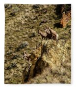 Posing Bighorn Sheep Fleece Blanket