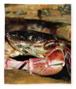 Posing Crab Fleece Blanket