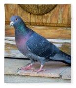 Posing Pigeon  Fleece Blanket
