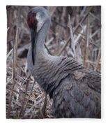 Posing Sandhill Crane Fleece Blanket