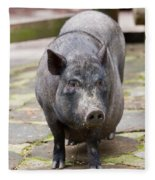 Potbelly Pig Standing Fleece Blanket