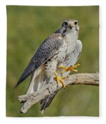 Prairie Falcon Fleece Blanket