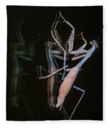 Praying Mantis 2 Fleece Blanket