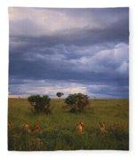 Pride Of Lions Fleece Blanket