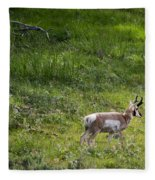 Pronghorn Antelope Among Wildflowers Fleece Blanket