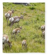 Pronghorn Antelope In Lamar Valley Fleece Blanket