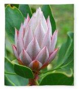 Protea Flower Blossoming Fleece Blanket