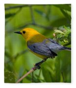 Prothonotary Warble Dsb071 Fleece Blanket