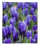 Purple Crocuses Fleece Blanket