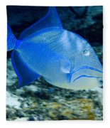 Queen Triggerfish Fleece Blanket