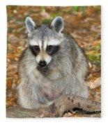 Raccoon Procyon Lotor Adult Foraging Fleece Blanket