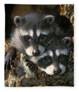 Raccoon Young Procyon Lotor In Tree Fleece Blanket