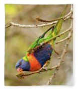 Rainbow Lorikeet 02 Fleece Blanket