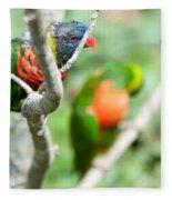 Rainbow Lorikeet Parrot Trichoglossus Haematodus Fleece Blanket
