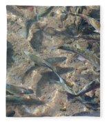 Rainbow Trout Art Prints Canvas Framed Fleece Blanket