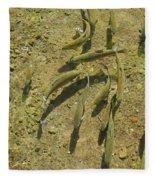Rainbow Trout Art Prints Fish Fishing Fishermen Fleece Blanket