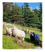 Ram And Ewes Fleece Blanket