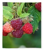 Rasberries Fleece Blanket