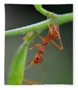 Red Ant Fleece Blanket