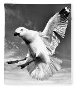 Red Billed Seagull In Black And White Fleece Blanket