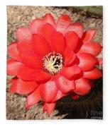 Red Cactus Flower Square Fleece Blanket