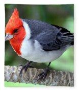 Red Crested Cardinal Fleece Blanket
