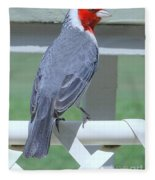 Red Crested Cardinal No 2 Fleece Blanket
