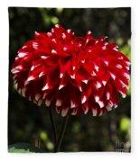 Red Dahlia Fleece Blanket