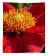 Red Dahlia Starlet Fleece Blanket