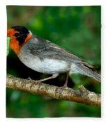 Red-faced Warbler With Caterpillar Fleece Blanket