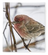Red Finch Fleece Blanket