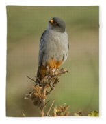 Red Footed Falcon Falco Vespertinus 1 Fleece Blanket