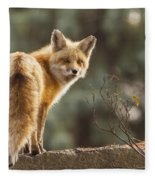 Red Fox In The Sunset Fleece Blanket