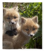 Red Fox Kits Playing Alaska Fleece Blanket