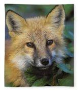 Red Fox Vulpes Vulpes, Gros Morne Fleece Blanket