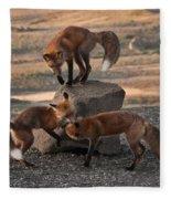 Red Foxes Vulpes Fulva Fleece Blanket