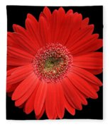 Red Gerber Daisy #2 Fleece Blanket