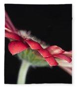 Red Gerbera 4 Fleece Blanket