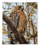 Red-shouldered Hawk In A Willow Tree Fleece Blanket