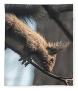 Red Squirrel Licking Dew Droplets  Fleece Blanket