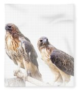 Red Tail Hawk Pair On White Background Fleece Blanket