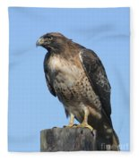 Red-tailed Hawk Monterey California  2008 Fleece Blanket