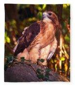 Red Tailed Hawk - 53 Fleece Blanket