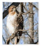 Red-tailed Hawk Looking Fleece Blanket